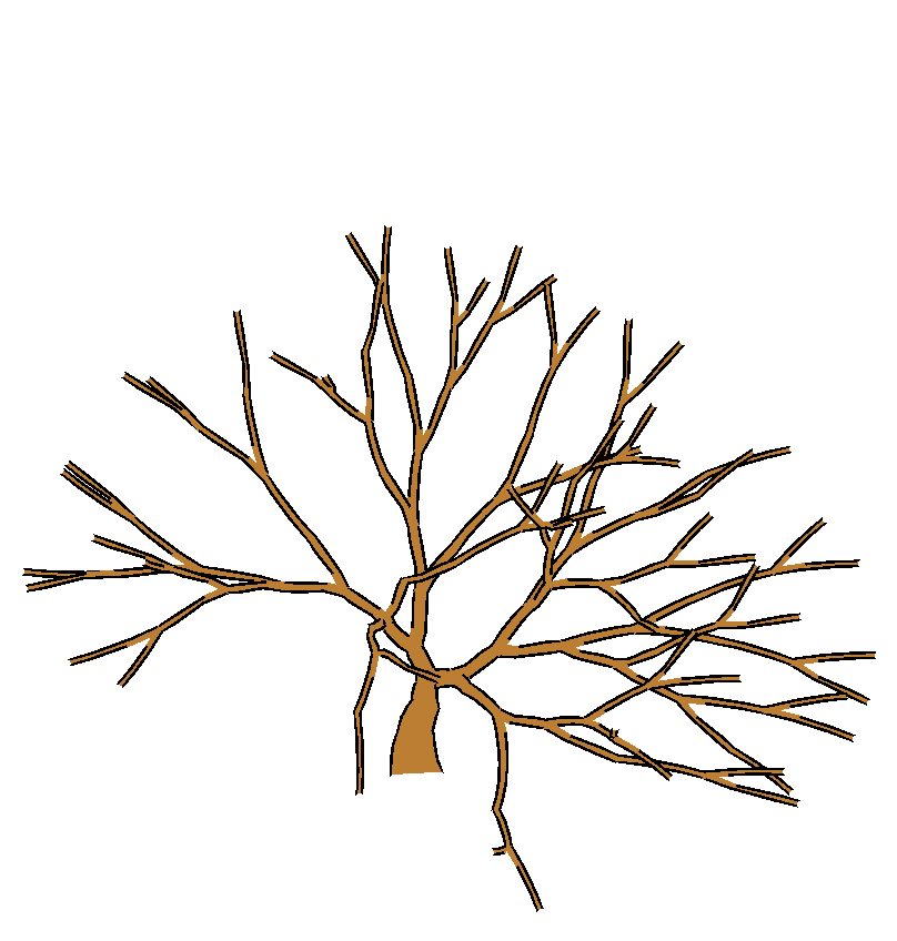 Rendering Artistic And Believable Trees For Cartoon Animation